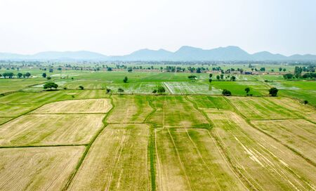 Birds eye view of paddy field ready for new corp