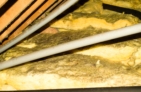 A typical household attic that is covered in mould spores. Imagens