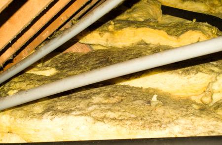 Een typische huishoudelijke zolder die bedekt is met schimmelsporen. Stockfoto
