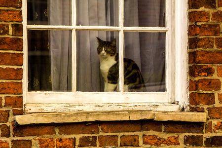 窓に座って一日を見守っている猫が通り過ごします。 写真素材 - 92599965