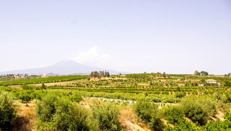 A view across the typial crops / orchids of Sicily, in Italy. Stock Photo