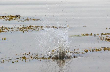 Splashes in the sea front waters.
