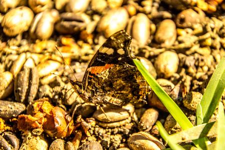 A beautiful orange and black butterfly. Stok Fotoğraf
