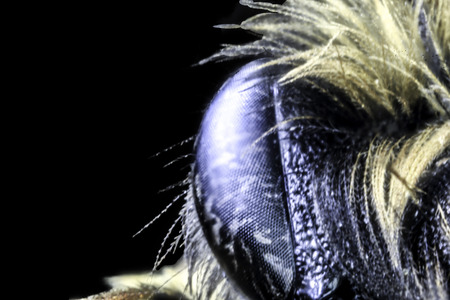 A very close up image of a typical wasp.