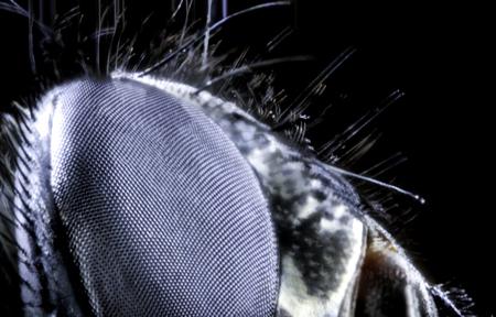 An ultra macro photo of a flys eye.