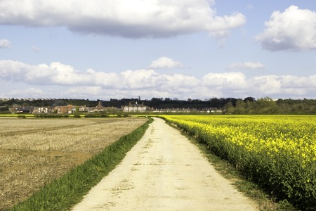 A view of the beautiful summer fields of Lincolnshire, United Kingdom.
