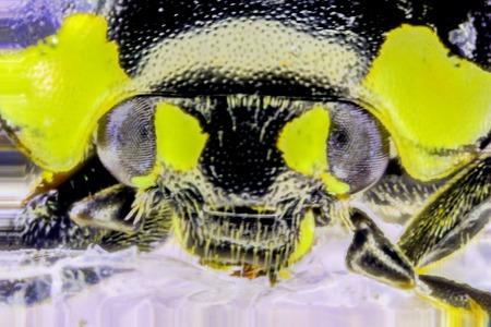 A very closeup photo taken of a tiny common Ladybird.