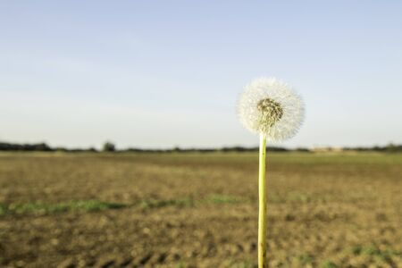 One of the most common flowers / weeds known, a Dandelion. With it's flourishing wishes it provides an overlooked beauty to the countryside.