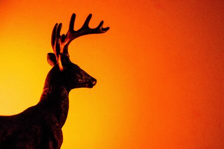 A beautiful Stag stands against a warm sunrise  sunset.