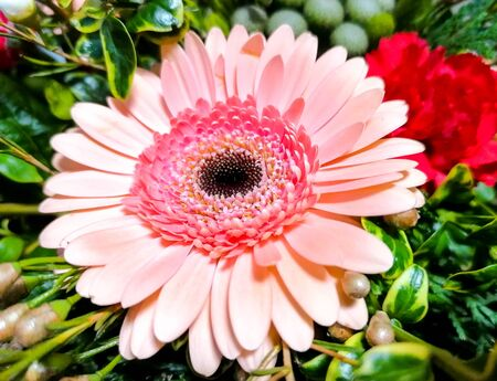A beautiful pink Gerbera flower prominent in amongst a beautiful bouquet made up by a florist.