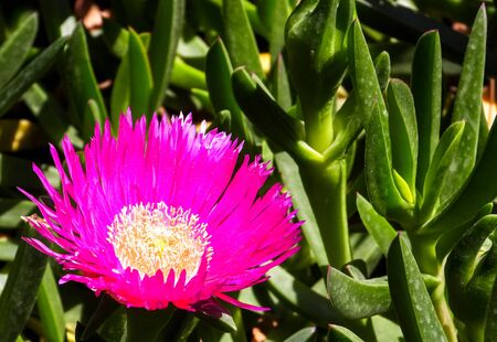 A gorgeous flower that has come out for the sunlight. Standard-Bild