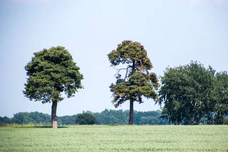 A lone tree in the heart of the United Kingdom.