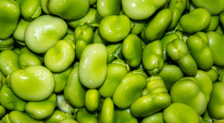 Fresh broad beans taken out their pods straight after they have been picked from a picking farm, in England, UK.