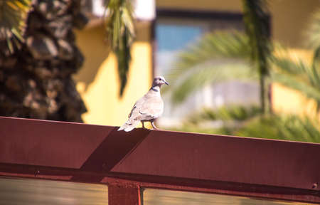 A typical bird found in every country in the world, the pigeon is the most common bird that can be found in most areas.