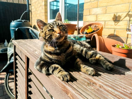 A dark coloured cat enjoys the heat of the sun, during summertime, and relaxes in the sunshine.