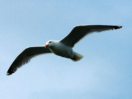 high angles: seagull Stock Photo