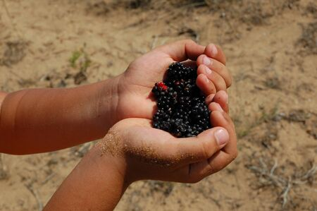 Blackberry in child hands photo