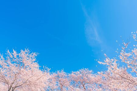 Spring in Japan, Cherry trees along the clear stream of Funakawa Beri, Toyama Prefecture Stok Fotoğraf