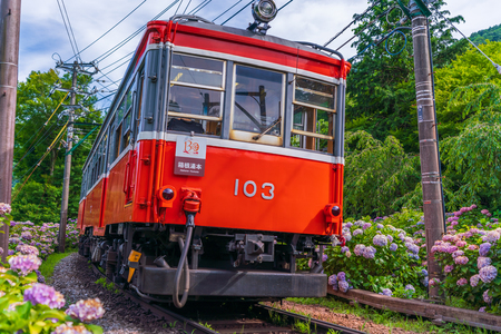 Scenery of Hakone in early summer, Hakone Tozan Railway and Hydrangea