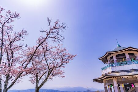 Spring in Japan, Hagino, Kanagawa. Cherry Blossoms in Koboyama Park Stok Fotoğraf