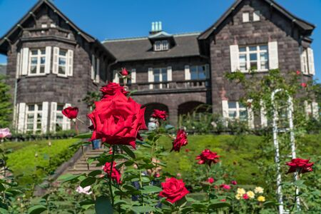 Kyu-Furukawa Gardens Autumn Rose