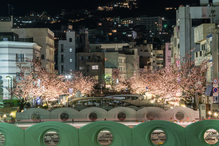 Atami in early spring, Night view of cherry trees along the Itogawa River