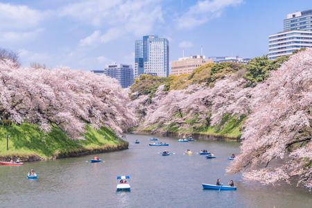 Spring in Japan, Urban Scenery of Tokyo [Sakura of Chidorigafuchi] Editöryel