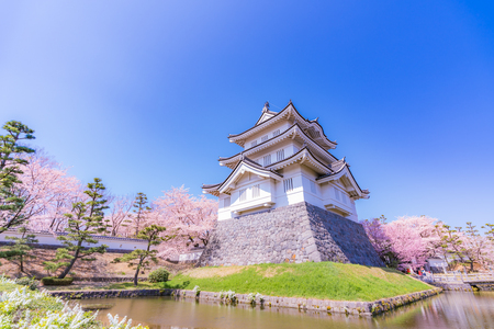 Spring in Japan, Cherry Blossoms of Oshi Castle, Gyoda, Saitama Prefecture
