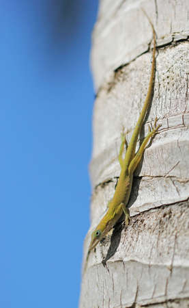 ander: The green lizard laying on the palm ander the sanshine