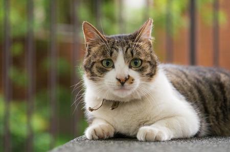 Cat in close-up shot  版權商用圖片