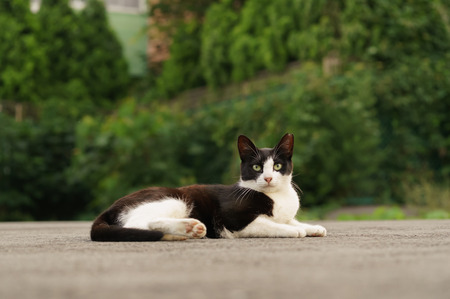 catnap: Cat in close-up shot  Stock Photo