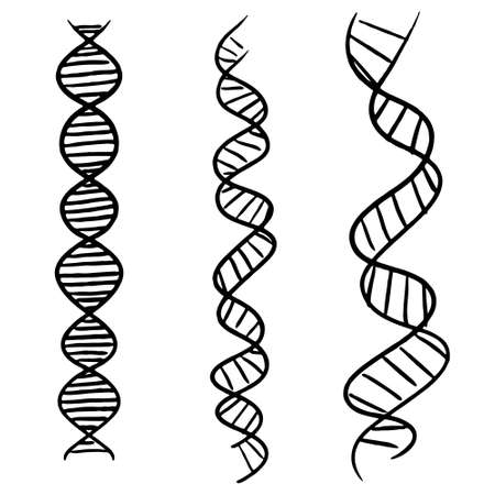 Hand-drawn DNA strand vector illustration