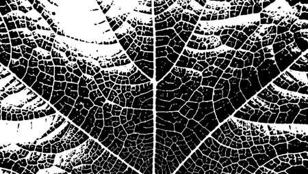 Leaf vein texture