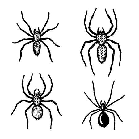 Hand-drawn spiders