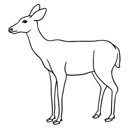 Deer standing Illusztráció