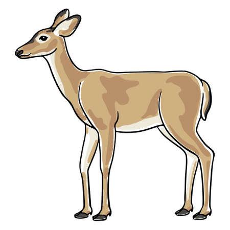Hand-drawn deer