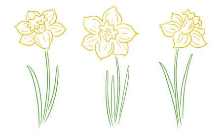 Hand-drawn daffodils Vector Illustration