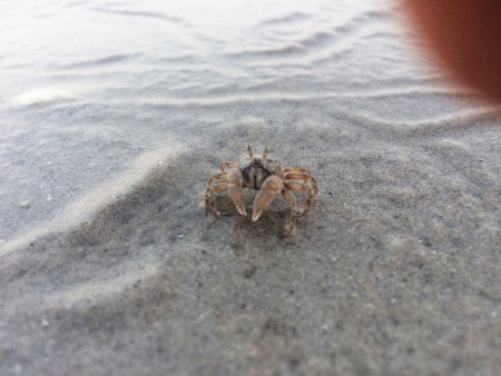 Little crab with wide sandy beach