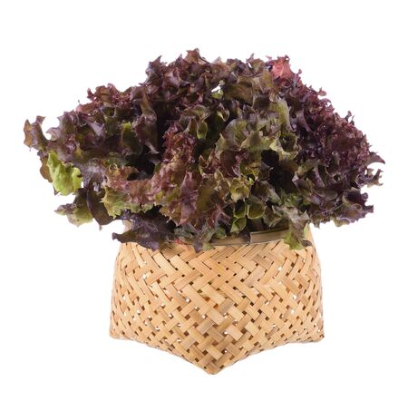 lettuces: Oak Leaf lettuce isolated on white background Stock Photo