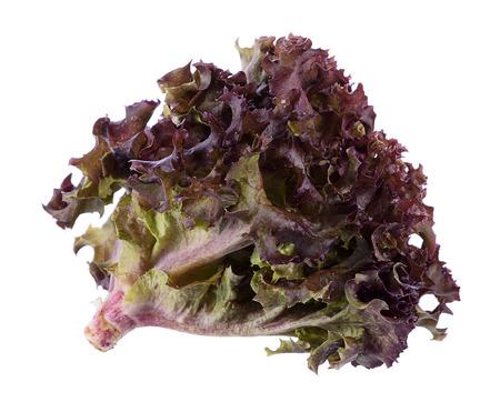 Oak Leaf lettuce isolated on white background Stock Photo