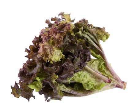 frilly: Oak Leaf lettuce isolated on white background Stock Photo