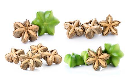 volubilis: Sacha Inchi on white background, fresh capsule seeds fruit of sacha-Inchi peanut