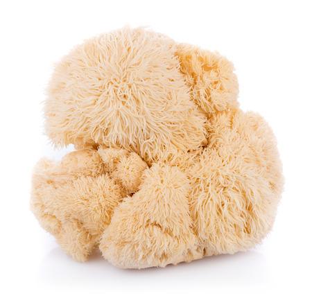 lion mane mushroom isolated on white background Reklamní fotografie
