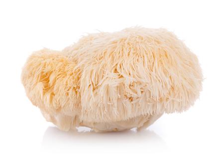 Löwenmähne Pilz isoliert auf weißem Hintergrund
