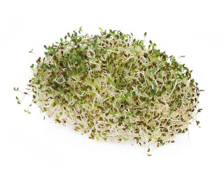 heap of alfalfa sprouts on white background Фото со стока