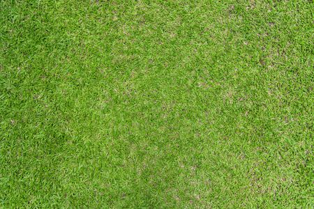 Closeup green grass natural background texture 版權商用圖片