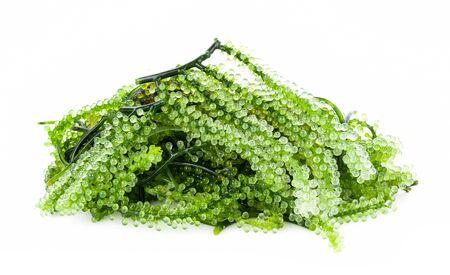Sea grapes ( green caviar ) seaweed on white background 版權商用圖片