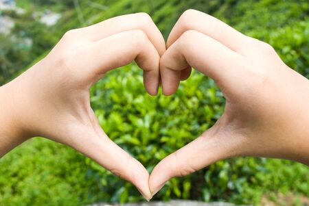 Hand forming love with tea plantation as background photo