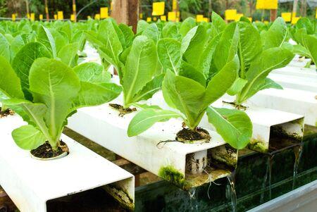 Green Vege - Hydroponic farming
