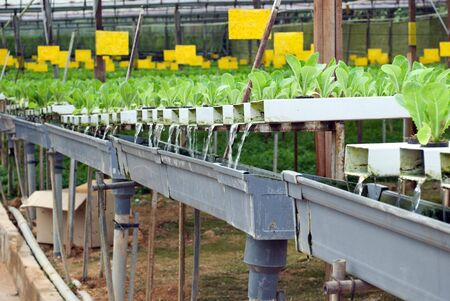 Greens - hydroponic farming photo